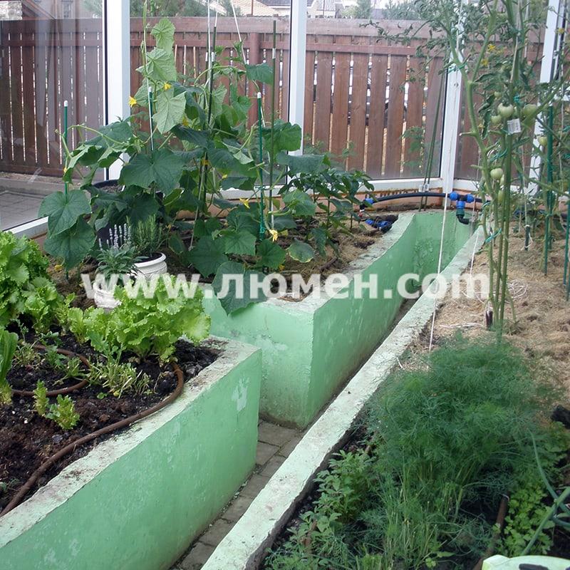 Выращивание томатов в восьмигранной теплице