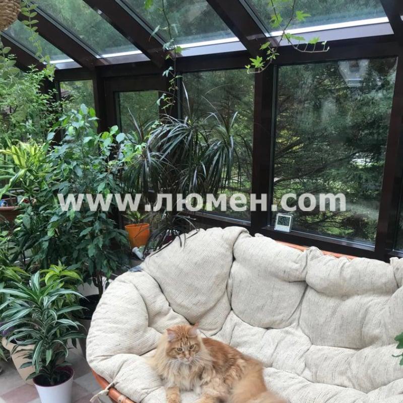 Кошка в оранжерее