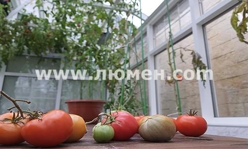 Овощи с круглогодичных теплиц