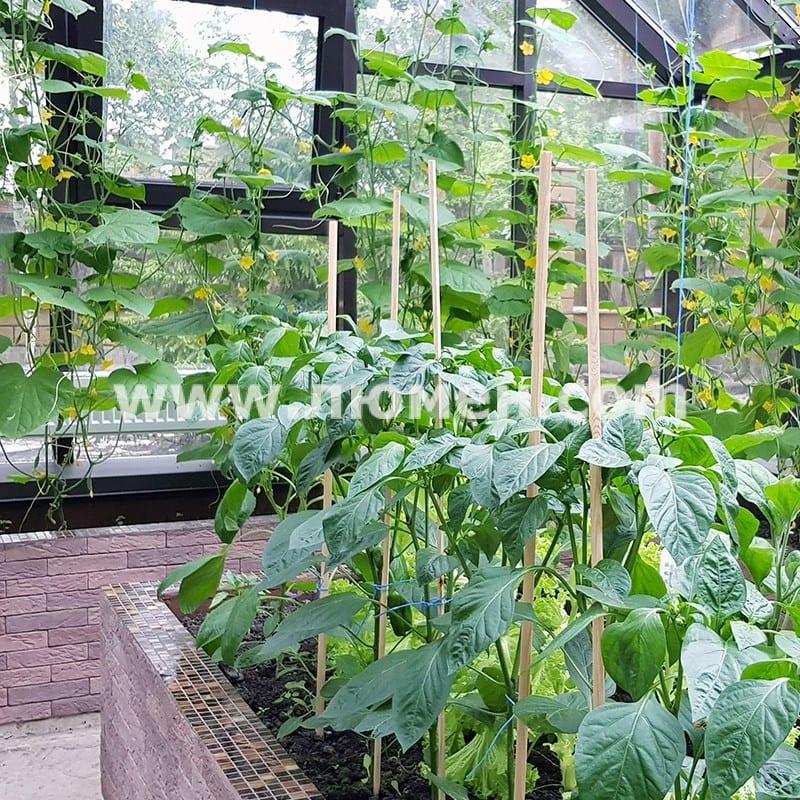 Выращивание овощных культур в зимней теплице